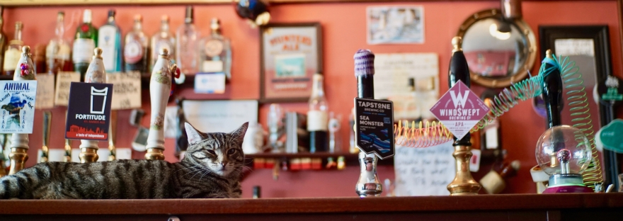 cat pub bag of nails in bristol with cask and keg beer